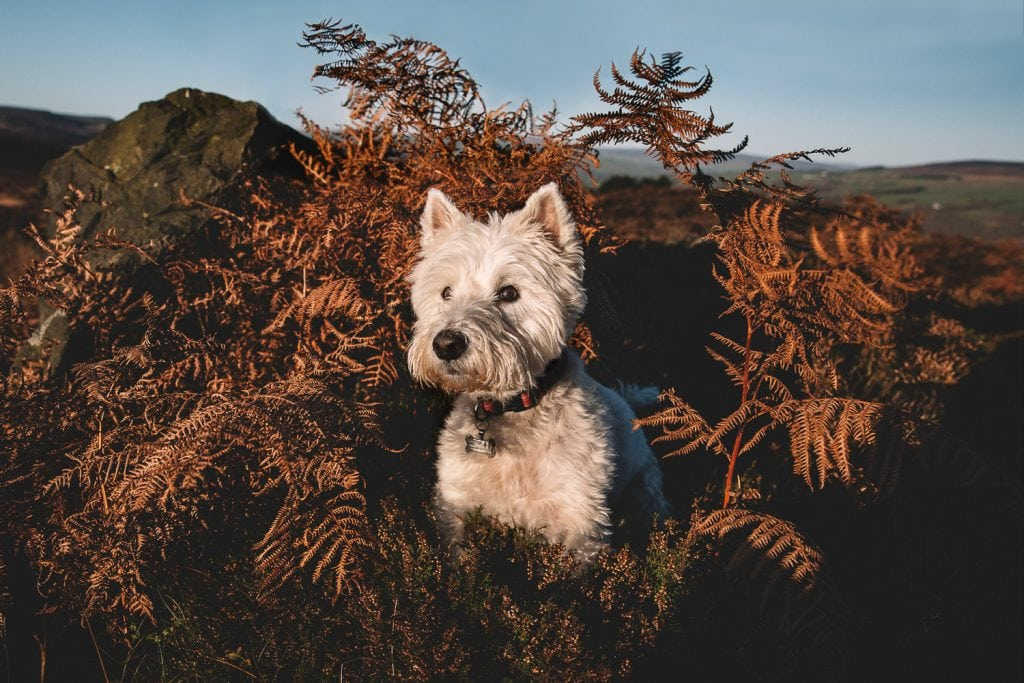 pet-photoshoot-ilkley-moor