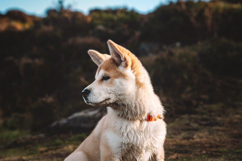 ilkley-pet-photographer
