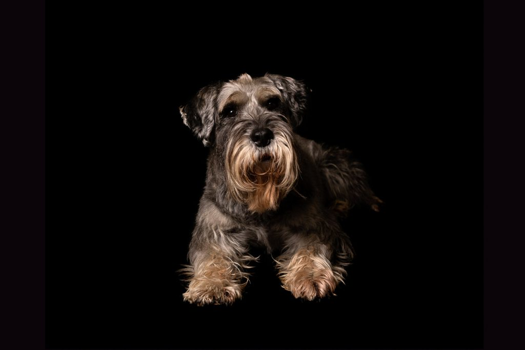 studio-pet-photography-leeds